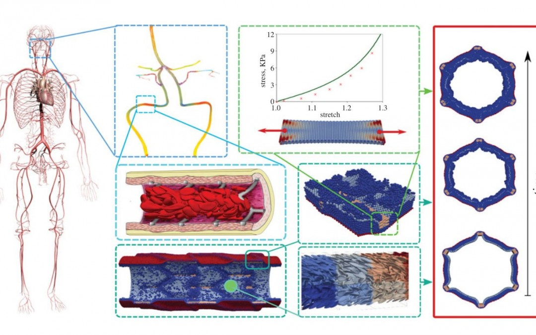 Towards the virtual artery: a multiscale model for vascular physiology at the physics–chemistry–biology interface